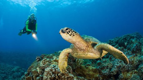 Maui-Hawaii-diving