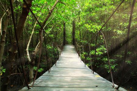 32123688 - suspension bridge in the forest